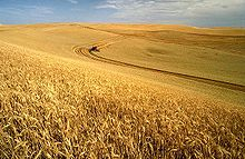 220px-Wheat_harvest